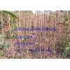 白芍、知母、瓜蒌、防风、柴胡、甘草、黄芩