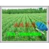 大量供应侧柏苗、刺槐苗、白皮松、油松、花椒苗、速生杨