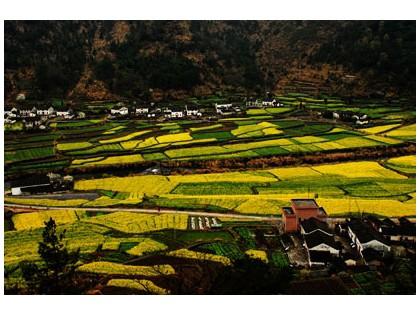 安徽池州石台县仙寓镇奇峰村:千亩梯田、万亩竹园