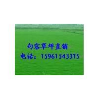 草坪,供百慕大与黑麦草混播草坪,天堂草15961543375