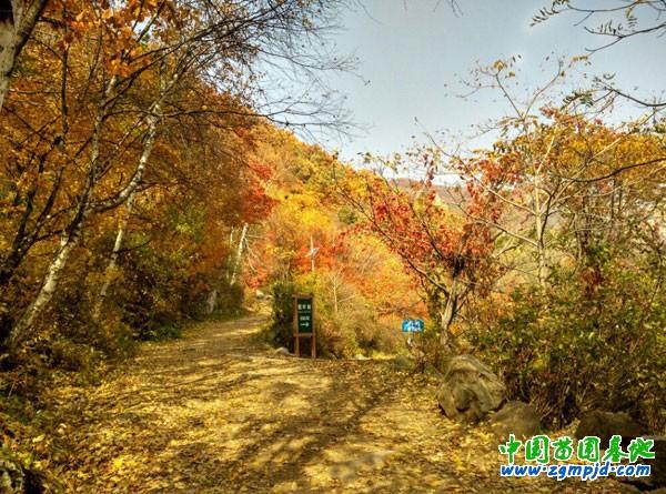 北京市怀柔区喇叭沟原始森林公园